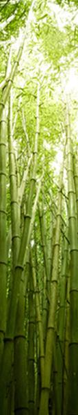 colonne bambou h600